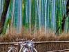 Arashiyama-18