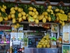 Italia - Capri: comparatie dintre lamai si capul vanzatoarei!