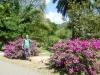 Kendy - Gradina Botanica, Sri Lanka