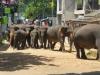 Sri_Lanka-59