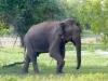 Sri Lanka, Yala_Park