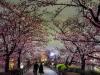 Japonia, Tokyo, Ueno Park